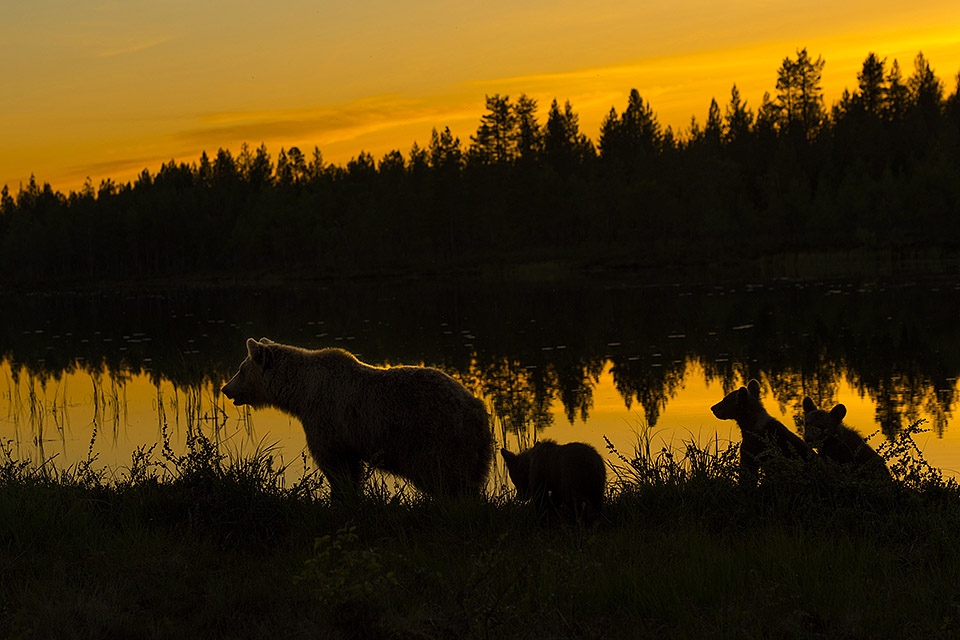 Bear family at the lake